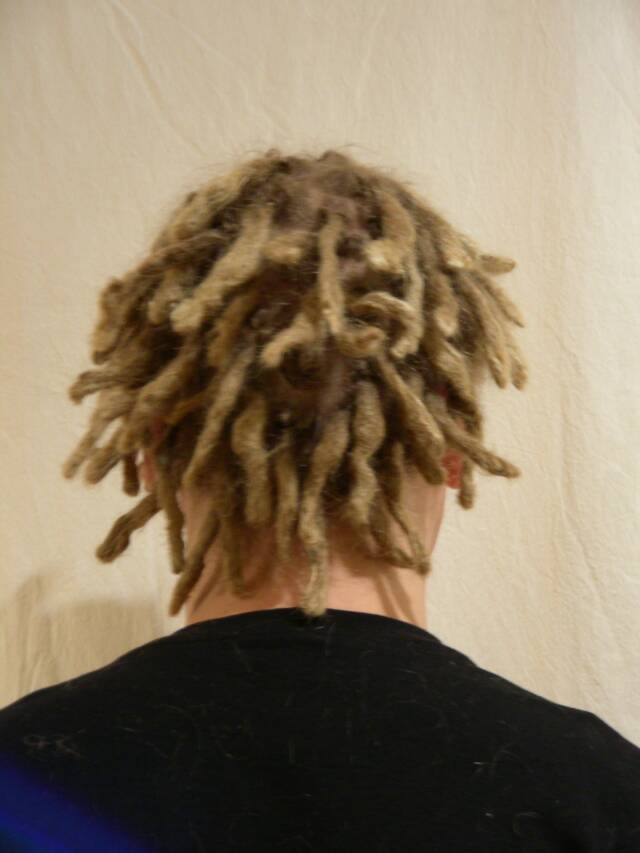 maintenance after starting dreads on short hair